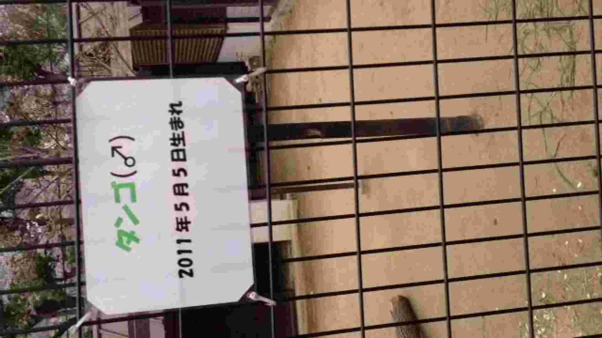 23(19日目)桜を見ながらお散歩 マンコ | 盗撮大放出  21連発 9